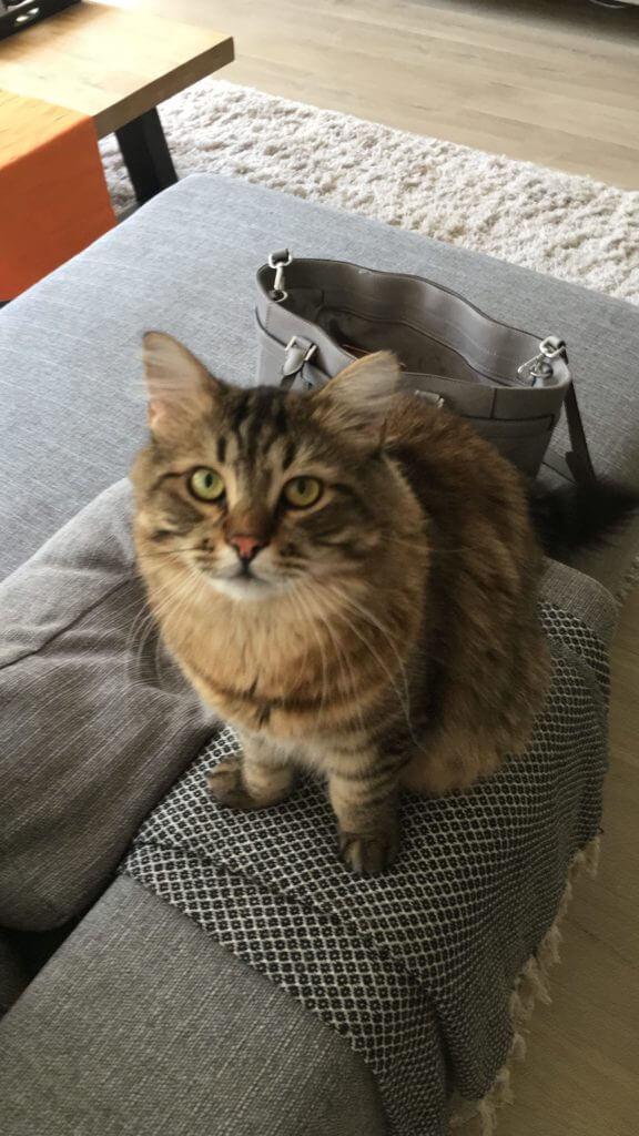 James the cat | Beautytijd | Eveline