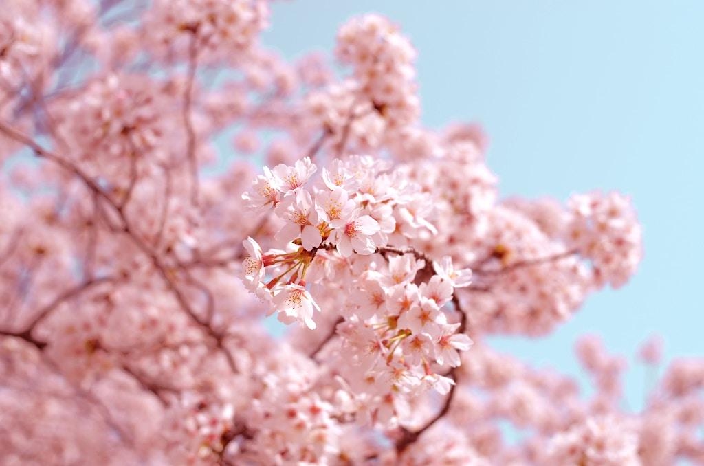 Rituals Ritual Of Sakura